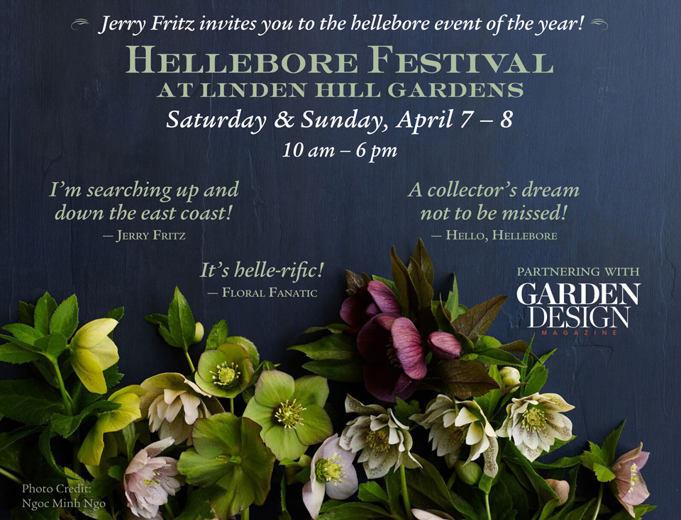 Jerry Fritz invites you to the hellebore event of the year! Hellebore Festival at Linden Hill Gardens, Saturday and Sunday, April 7 - 8, 2018 from 10am - 6pm