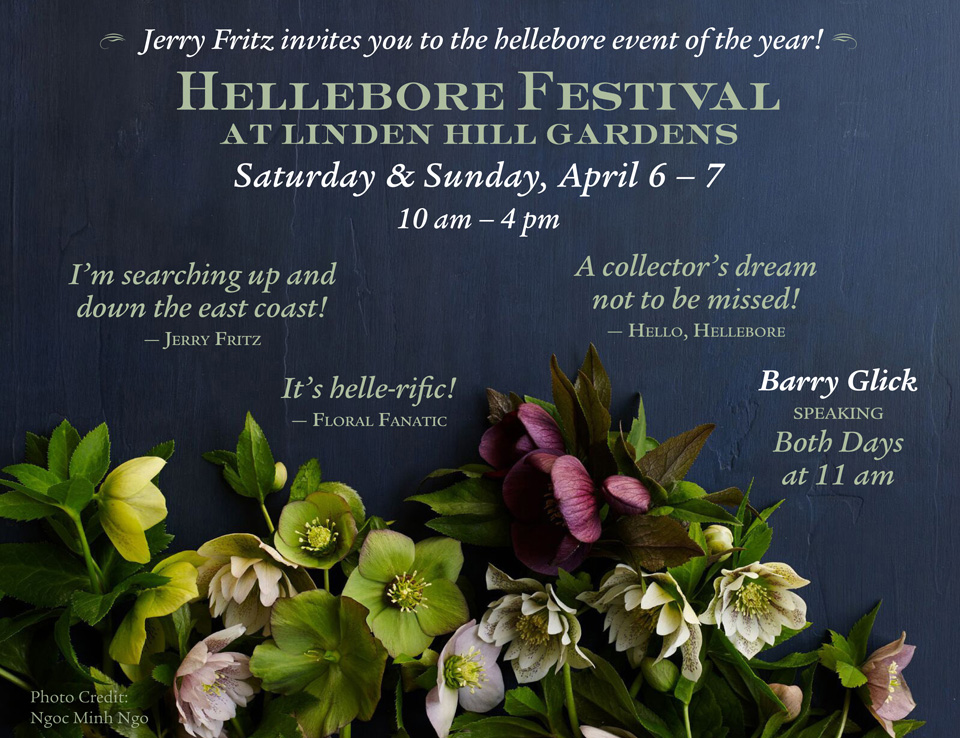 Jerry Fritz invites you to the hellebore event of the year! Hellebore Festival at Linden Hill Gardens, Saturday and Sunday, April 6 - 7, 2019 from 10am - 4pm