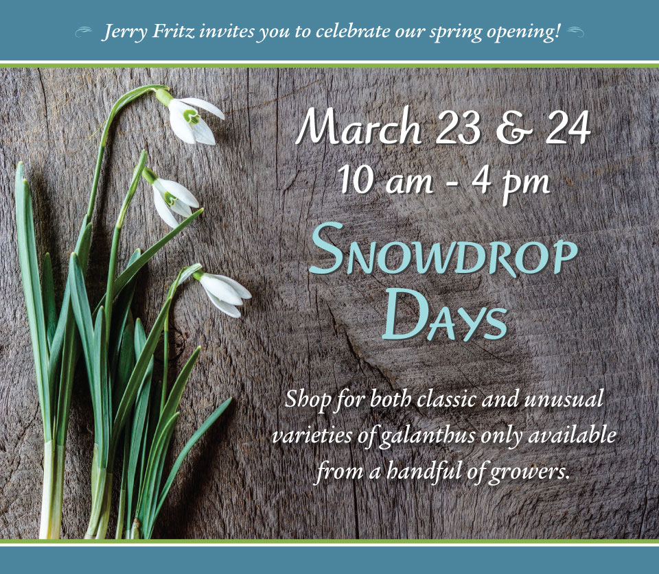 Jerry Fritz invites you to celebrate our spring opening! Snowdrop Days at Linden Hill Gardens, Saturday and Sunday, March 23 and 24, 2019 from 10am - 4pm
